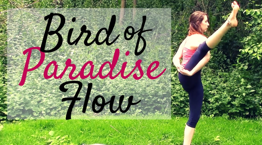 Bird Of Paradise Flow – New Class